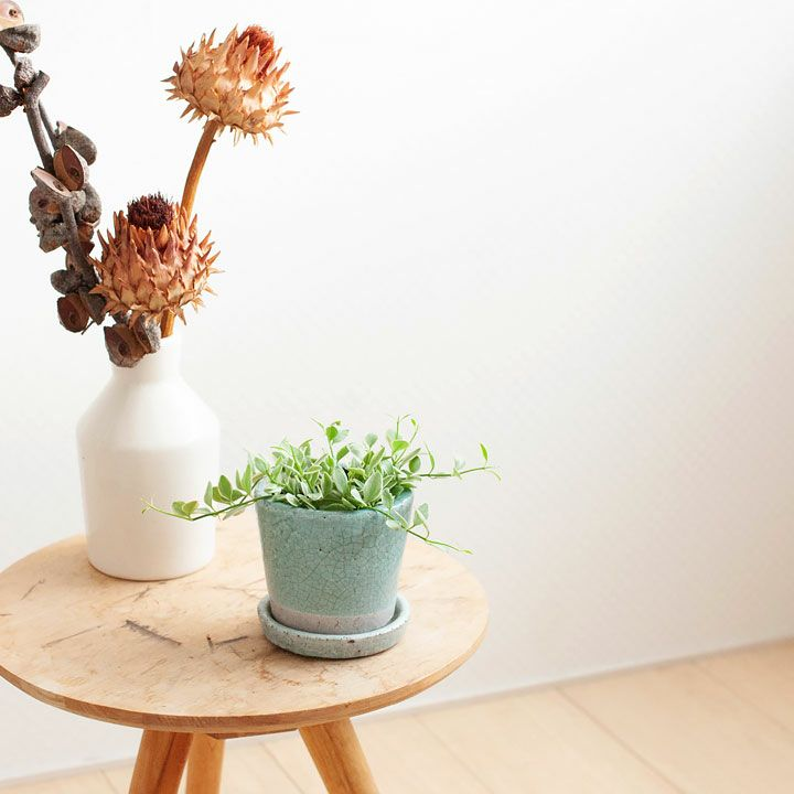 ディスキディア・エメラルドを陶器鉢にイメージ